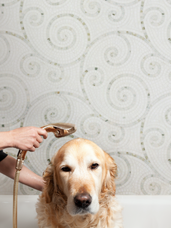 DQS_ODYSSEUS_WARM_DOGGY_SHOWER_REV